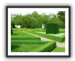Buxus | Box hedge